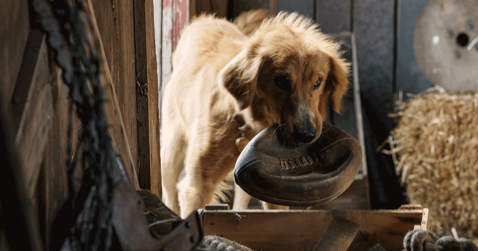 A Dog's Purpose - Photo 3